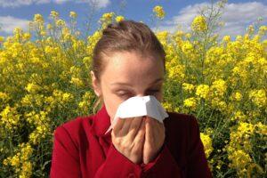 Ambrozija alergija