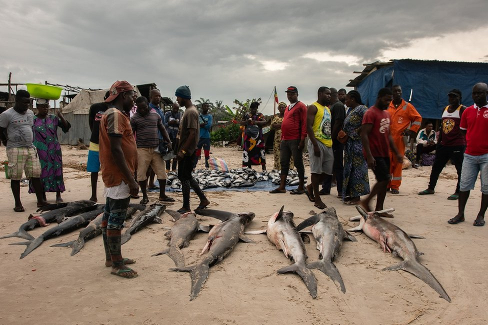 People looking at sharks on a beach