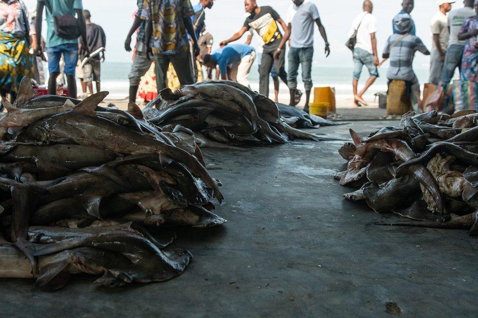 Piles of sharks